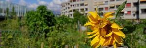 Jardins-potagers-urbains-web